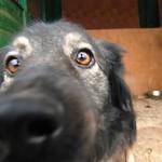 Тарас Юрик хоче 300 тисяч на бездомних псів